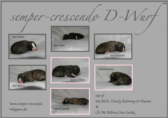 d-wurf_1-small1.jpg